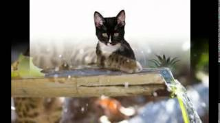 лучший влажный корм для кошек