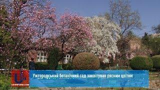 Ужгородський ботанічний сад заквітував рясним цвітом