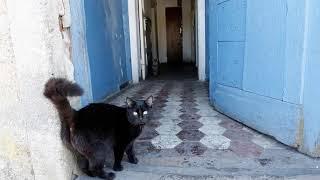 Драка из за кошки которая гадила в подъезде