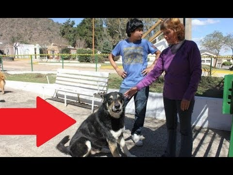I Knew Dogs Were Loyal Pets, But This Is Beyond Anything I Have Ever Seen !