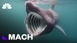 The Meg: Is The Terrifying Prehistoric Shark From Jason Statham's New Movie Real? | Mach | NBC News