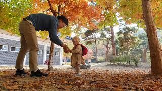 2019년 아빠의 육아휴직(68일차) 낙엽보다 더 예쁜…