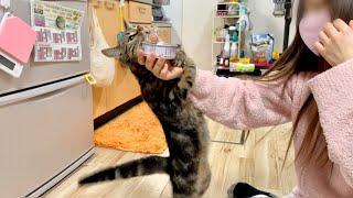 高級猫缶を取り出した瞬間あからさまに態度を豹変させる子猫w