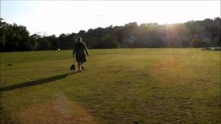 Cavalier King Charles Spaniel: The Daily Maisy: Maisy's First Trip To The Park