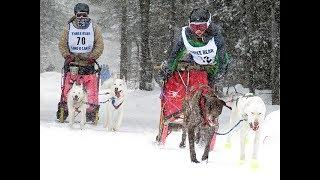 2018 Three Bear 4 Dog Pure Bred & Sportsman video