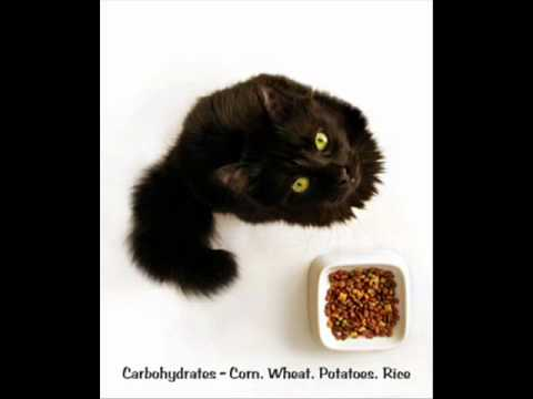 Cat Urinary - Struvite Crystals In Cats