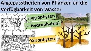 Hygrophyten Lexikon Der Biologie 7
