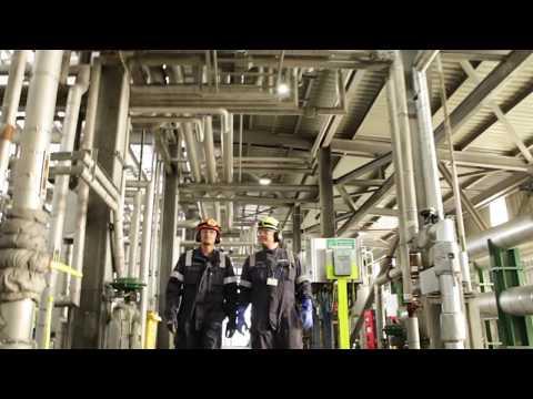 Greenergy biodiesel production