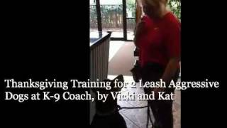 Thanksgiving Training For 2 Leash Aggressive Dogs At K-9 Coach, By Vicki And Kat-mobile.m4v