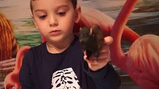 коллекция животных Schleich/животные для детей/игрушки/обзор игрушек/Шлейх