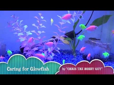 How To Care For GloFish...