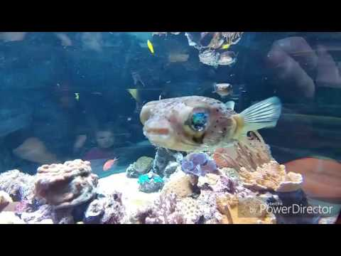 aquarium of the pacific long beach 2016