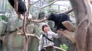 神戸どうぶつ王国 アジアの森より ジャコウネコ科の巨大な獣ビントロン...