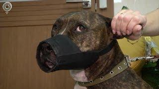 Владельцы кошек, собак и домашнего скота обязаны чипировать и маркировать животных