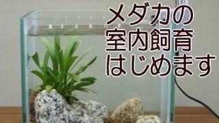 メダカ室内飼育向けのミニ水槽をセッティングします。 水槽の状態を今後...