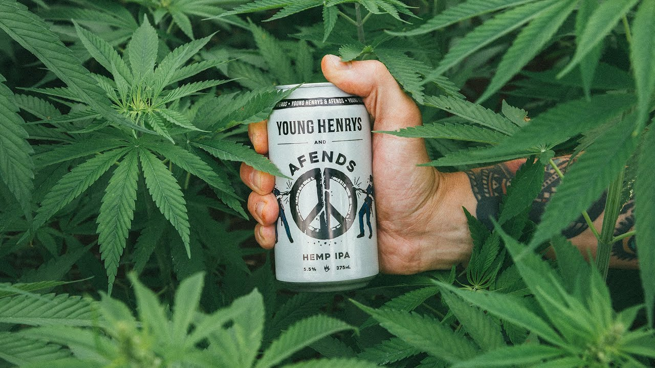 cdabe05549 Afends x Young Henrys Hemp IPA Launch - Byron Bay - YouTube