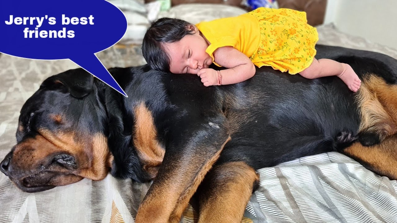 My dog is going crazy for my baby||Cute love story.