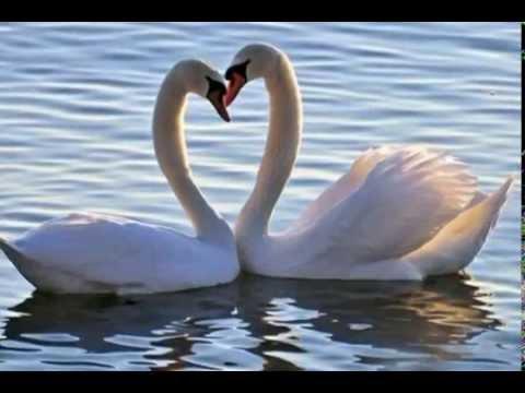 Mister X Love Serenade (Franz Schubert)