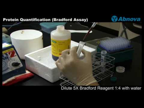 Protein Quantification (Bradford Assay)