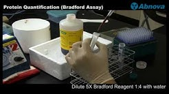 Protein Quantification (Bradford Assay)