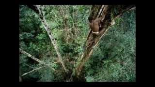 Amazon'da Bir Kabilenin Dış Dünyayla Ilk Teması