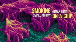Smoking Human Lung Small Airway on a Chip thumbnail