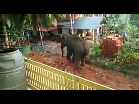 elephant attack[ in india