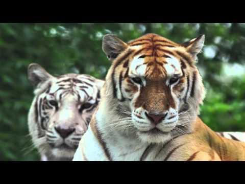 Dakota Zoo - Capital Campaign