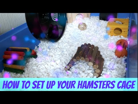How To Set Up Your Hamsters Cage