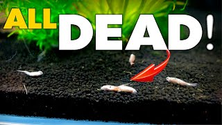 ENTIRE TANK DEAD! (how did this happen) | MD Fish Tanks