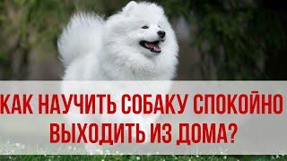 Как научить собаку спокойно выходить на прогулку из дома? Приучаем собаку к спокойствию