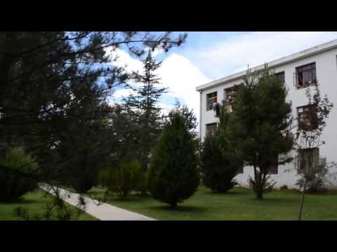 small forest in Tibet University Lhasa Tibet  July  2014