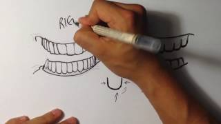 How to Draw Teeth - Easy Pictures to Draw
