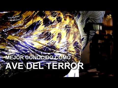 Ave del Terror