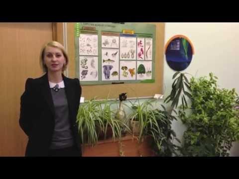 Конкурс Педагог года Москвы 2015. Новикова Елена Александровна