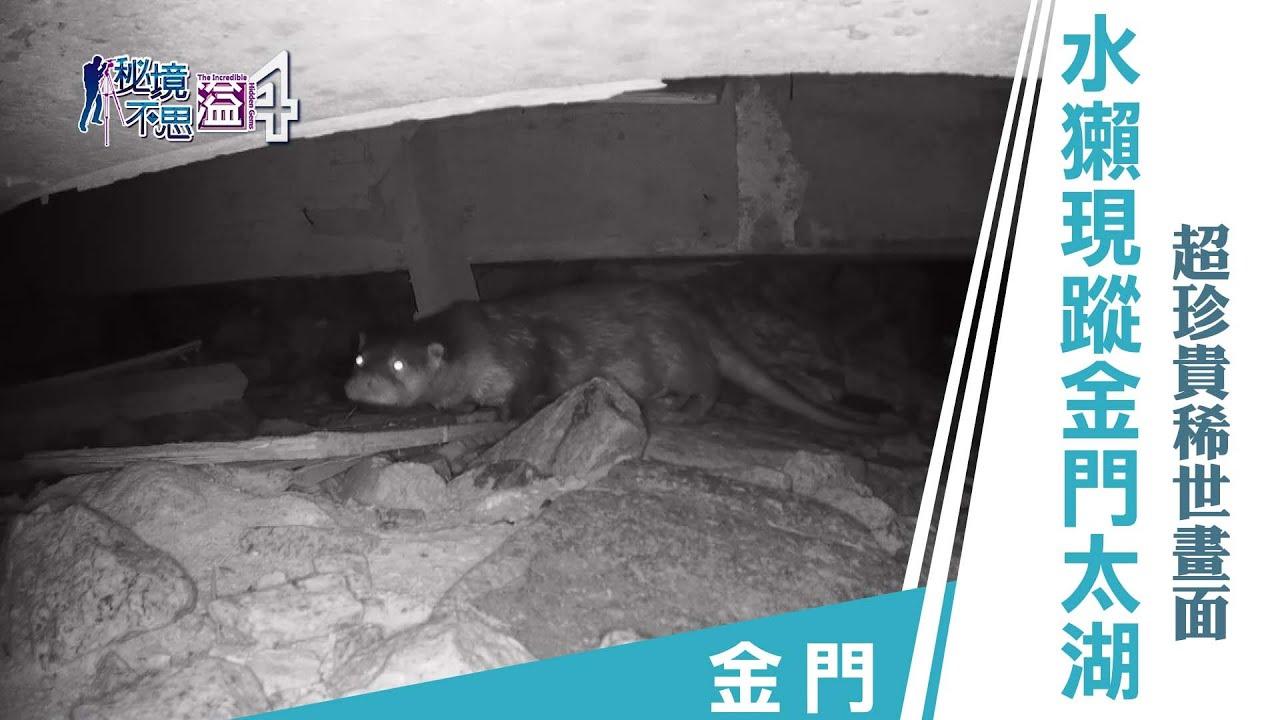 【安心國旅】振興台灣 何處去|金門最大水庫出現瀕臨絕種保育類!