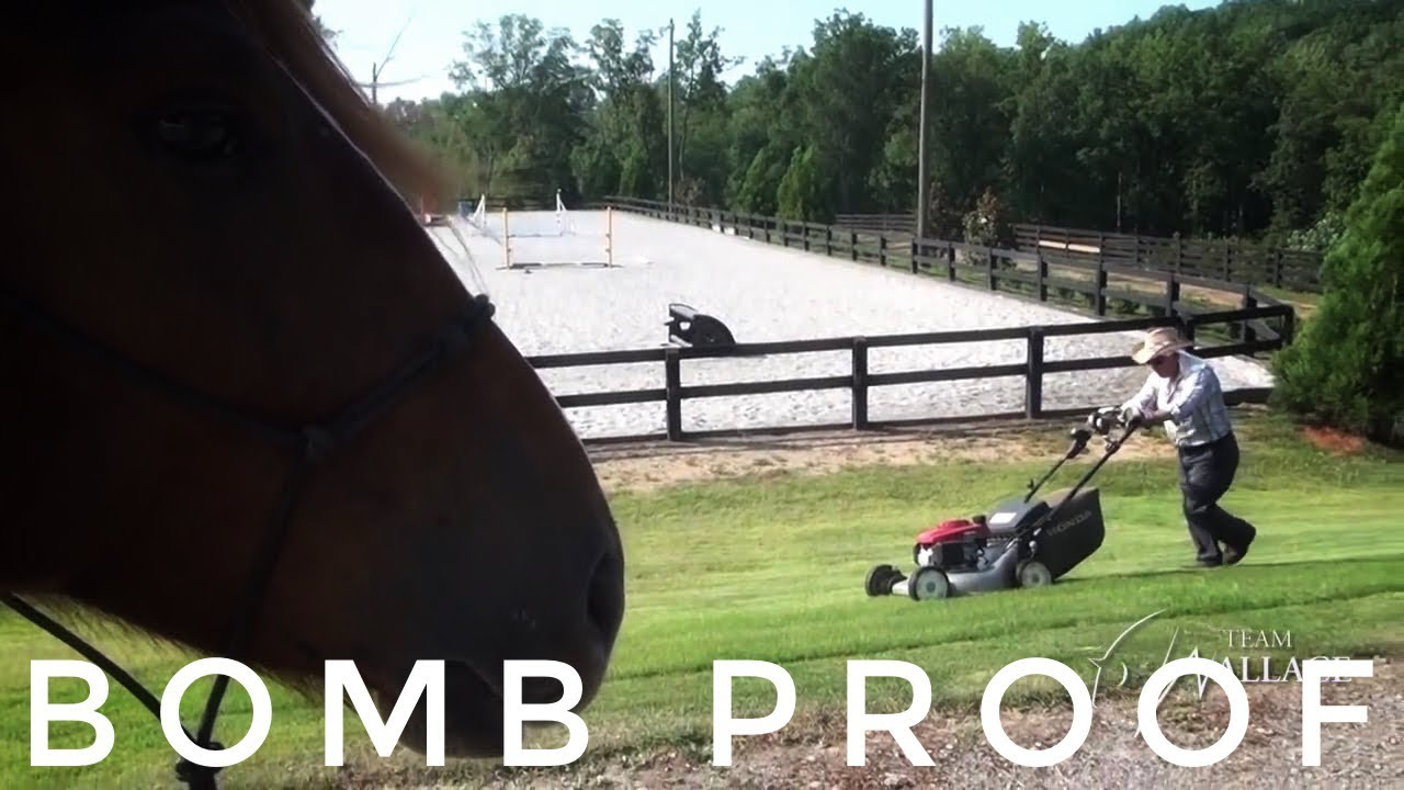 Extreme Mustang Makeover Days 4 6 Proof