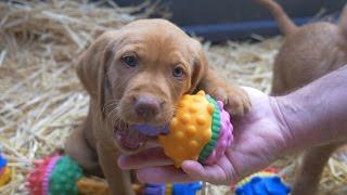 Baixar Schnuzzle: Você acha que conhece brinquedos para cães? ...pense novamente.