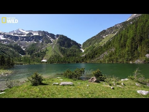 The natural beauty of the Hohe Tauern National Park at Austria - National Geographic Documentary