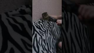 Кот и плойка :D