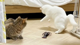 ENG) My cats surprised by moving shrimp!