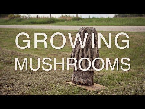 Growing Mushrooms   Iowa Ingredient