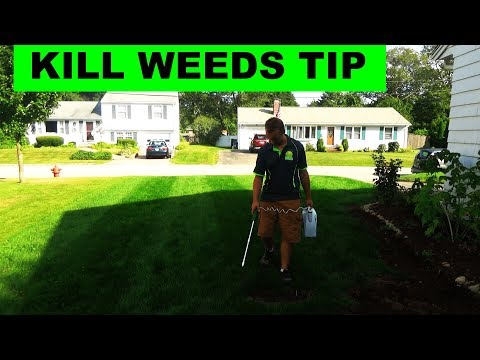 Tip for killing all the weeds in your lawn