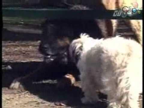Video Hài hước - Chó sủa - ChuTui.flv