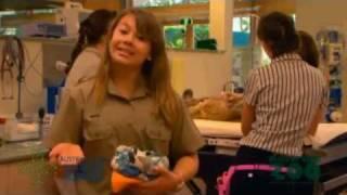 Bindi Irwin - Australia Zoo