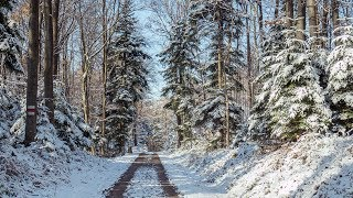 Sunny winter morning - full 4.5km walk [3d binaural audio]