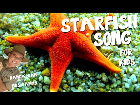 STARFISH SONG FOR KIDS | Under The Sea Songs | Animal Songs | Kids Songs | Creation Connection