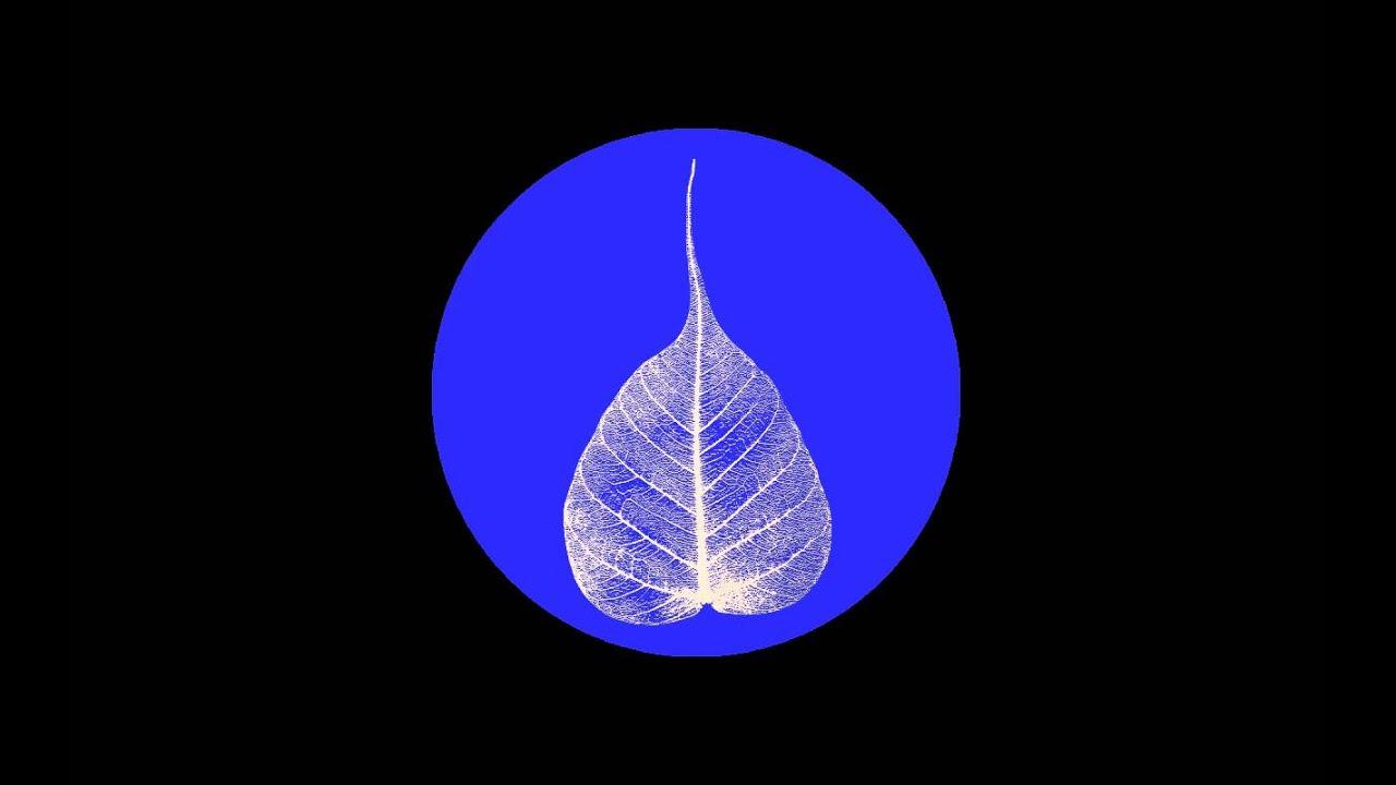 Image result for bhikkhu