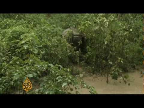 Nepal deploys drones to fight rhino poachers