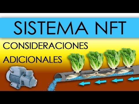 HIDROPONÍA - SISTEMA NFT EN LECHUGAS (Nutrient Film Technique)